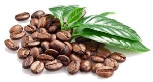 coffee-beans-robusta
